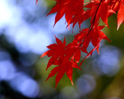 autumn-leaves-968269_1280